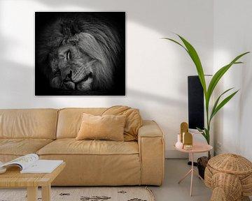 Schlafender Löwe in Schwarz und Weiß von Marjolein van Middelkoop