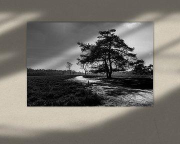 Zwart en wit beeld van boom op de heide van Linsey Aandewiel-Marijnen