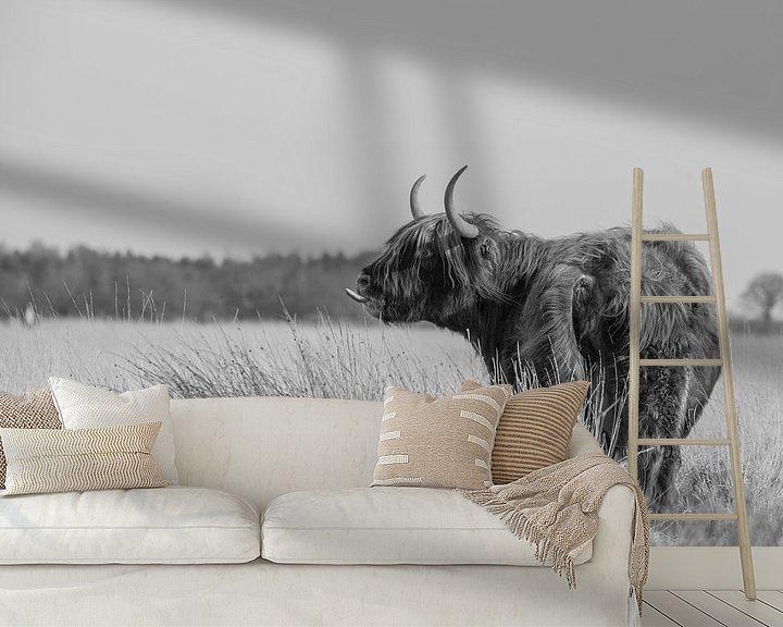Sfeerimpressie behang: Schotse Hooglander van Karin van Rooijen Fotografie