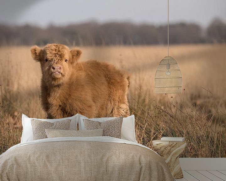 Sfeerimpressie behang: Schotse Hooglander kalf op het Hijkerveld, Drenthe van Karin van Rooijen Fotografie