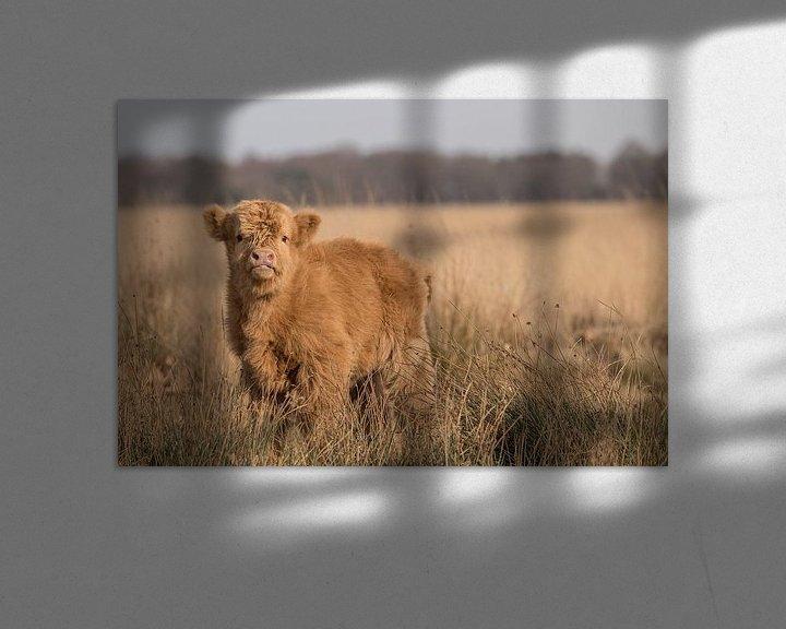 Sfeerimpressie: Schotse Hooglander kalf op het Hijkerveld, Drenthe van Karin van Rooijen Fotografie