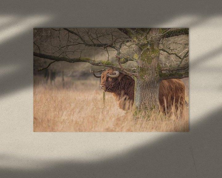 Sfeerimpressie: Schotse Hooglander stier van Karin van Rooijen Fotografie