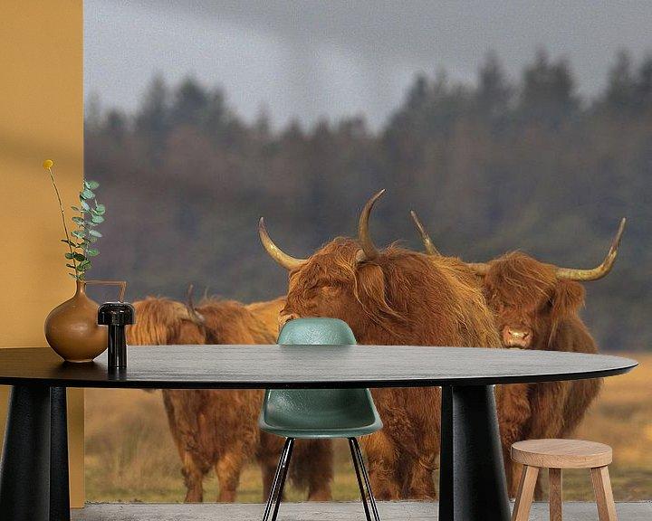 Sfeerimpressie behang: Schotse Hooglander koeien van Karin van Rooijen Fotografie