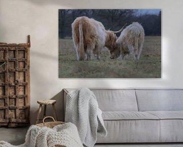 Schotse Hooglander moeder en kalf van Karin van Rooijen Fotografie