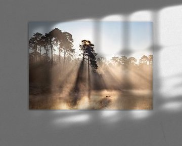 Zonsopkomst met mist en eenden