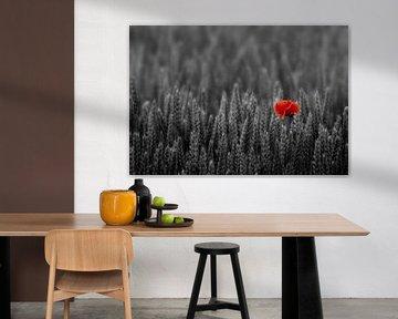 Red Poppy von Beate Wurster