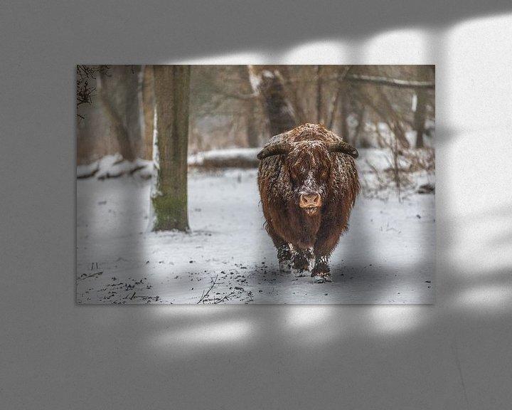 Sfeerimpressie: Schotse hooglander van Robin Smit