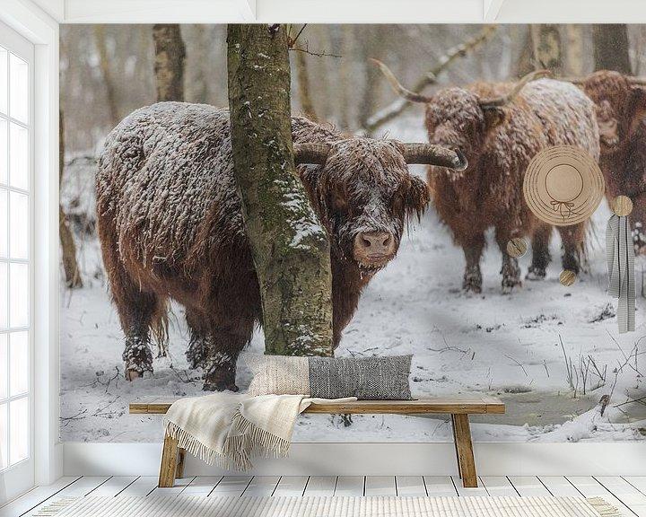 Sfeerimpressie behang: Schotse hooglander van Robin Smit