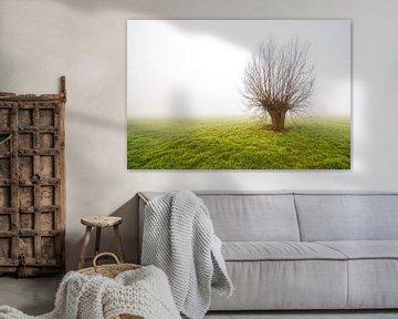 Mistige morgen met alleen staande boom van Marcel Derweduwen