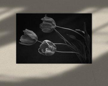 Tulipes françaises 1 sur Zus en Zo Foto
