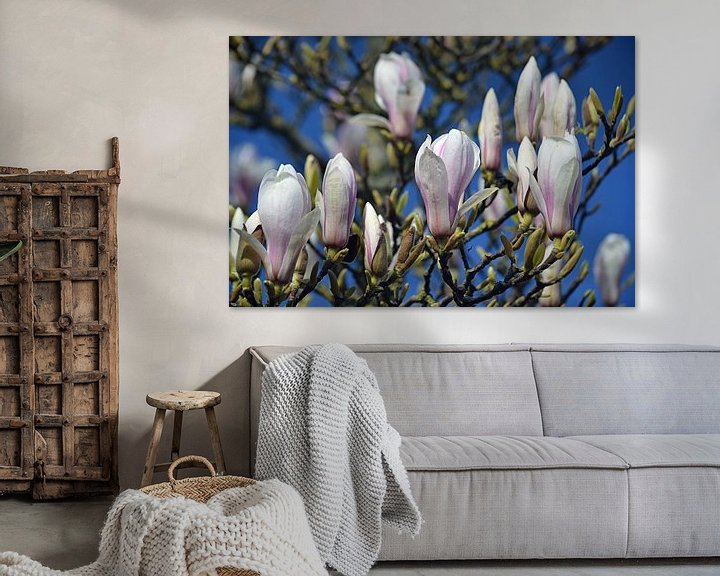 Sfeerimpressie: Bloeiende magnolia van JTravel