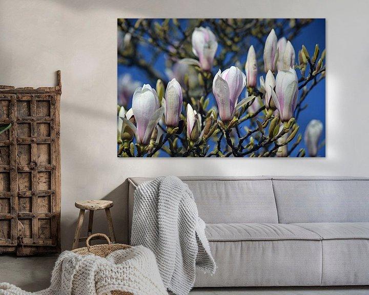 Beispiel: Magnolie in Blüte von JTravel
