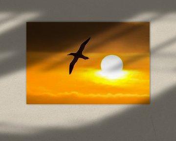 Reis naar de zon als Icarus