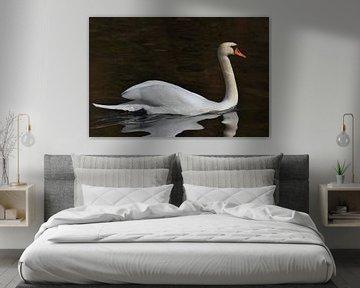 Swan van Miroslav Plahusch