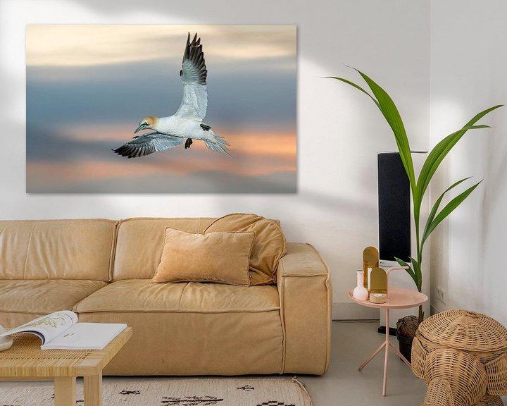 Sfeerimpressie: Een fascinerende zeevogel, de Jan van Gent van Gerry van Roosmalen