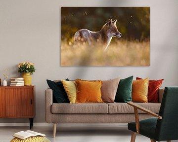 Een vos in mooi licht