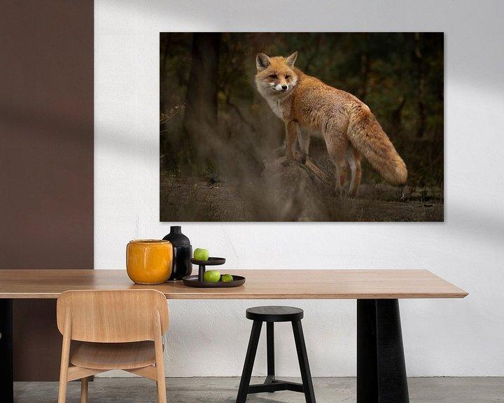 Beispiel: Fuchs im Wald (Veluwe) von Frans Roos