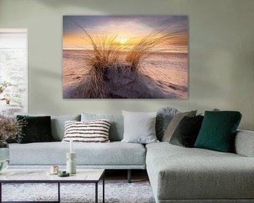 Dans les dunes de Texel