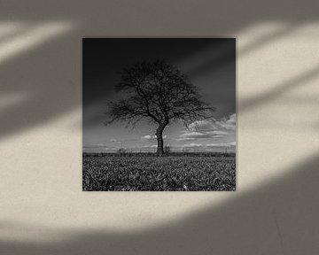 Schwarz-Weiß-Foto von grünen Wiese mit einem Baum am Horizont im Frühling in Mechelen, Limburg von Kim Willems