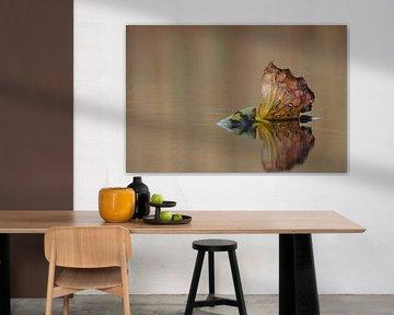 Herbstblatt auf der Wasseroberfläche