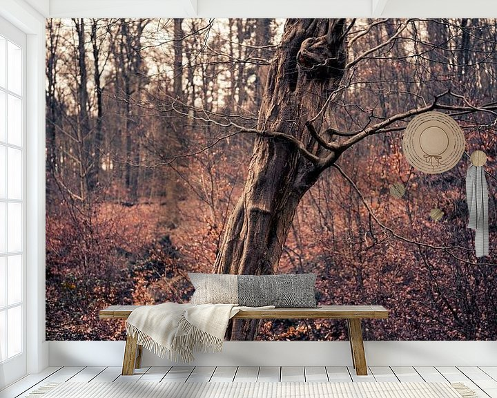 Beispiel fototapete: Ein schöner alter Baum in Arnheim von Steven Dijkshoorn
