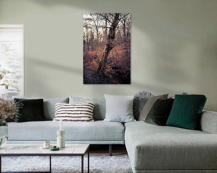 Beispiel: Ein schöner alter Baum in Arnheim von Steven Dijkshoorn