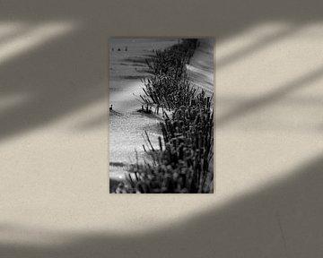 Dünenschutz und Schnee von Norbert Sülzner
