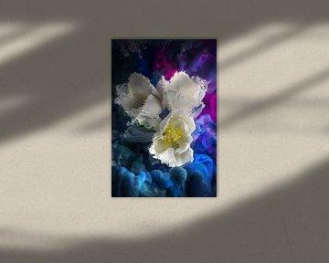 Weiße Tulpen von Steffen Gierok