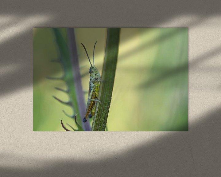 Beispiel: Grashüpfer zwischen dem Gras von Astrid Brouwers