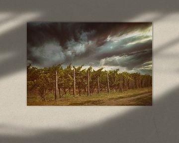 Wijngaarden in de Pfalz van Norman Krauß