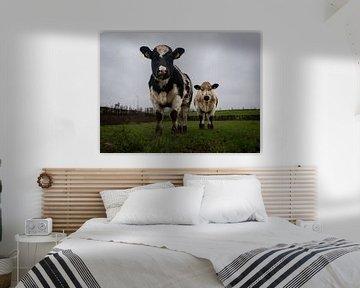 Koeien in de regen van Femke Straten