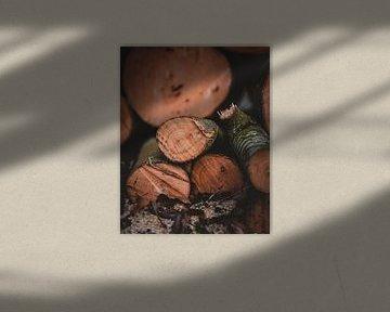Brandhout stilleven van Pim Haring