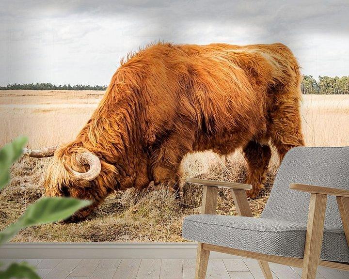 Sfeerimpressie behang: Schotse hooglander grazend van hoog gras van MICHEL WETTSTEIN