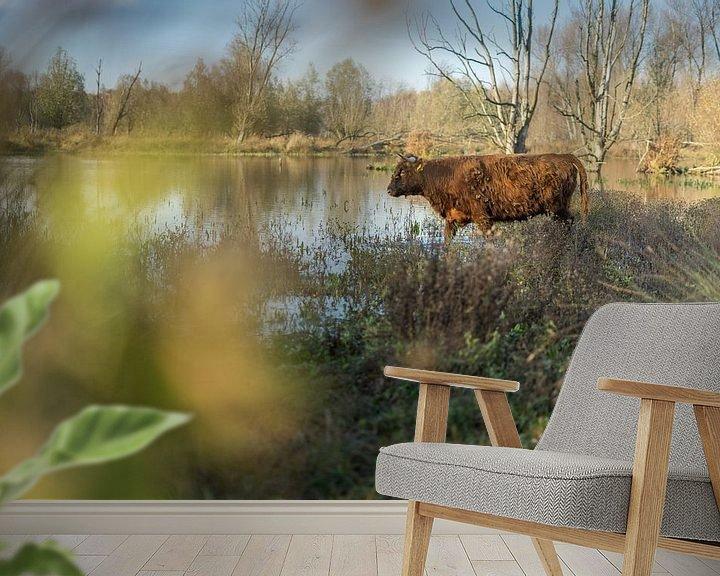 Sfeerimpressie behang: Schotse Hooglander in de Broekpolder in de Herfst van Rossum-Fotografie