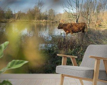 Schotse Hooglander in de Broekpolder in de Herfst van Rossum-Fotografie
