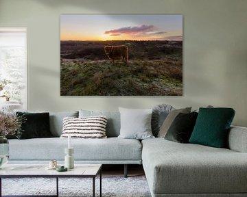 Schotse Hooglander Kalf op duintop tijdens zonsopkomst van Remco Van Daalen