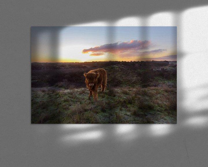 Impression: Le veau écossais Highlander au sommet d'une dune vient vers moi sur Remco Van Daalen