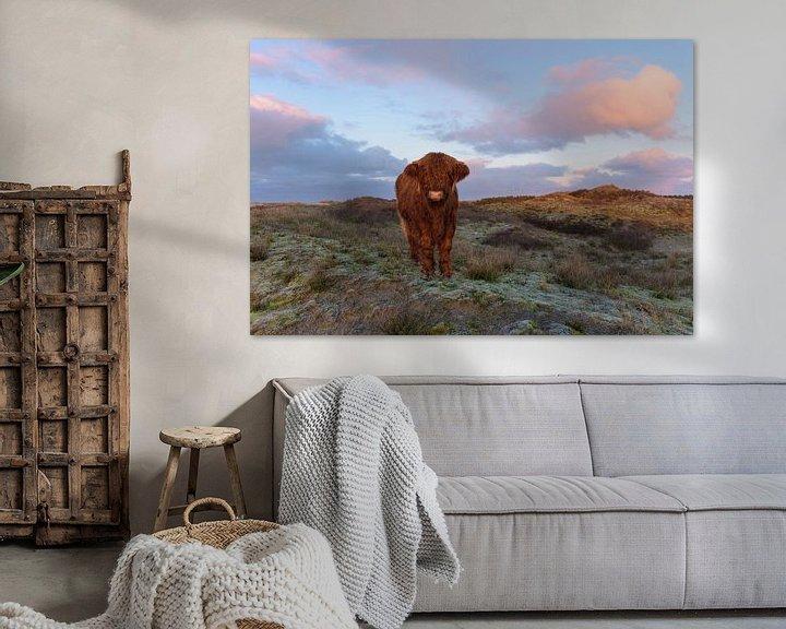 Sfeerimpressie: Schotse Hooglander Kalf op duintop komt naar me toe van Remco Van Daalen
