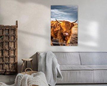Highland-Cattle von Sven Frech