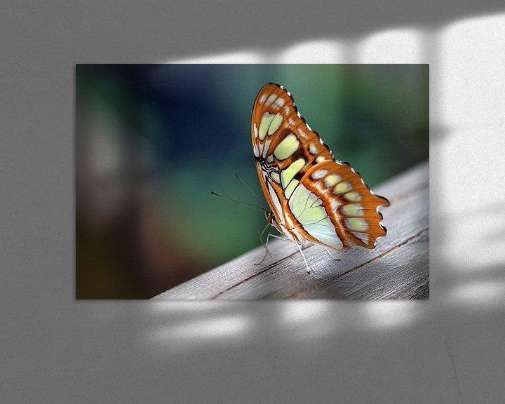 Beispiel: Vlinder op een stuk hout 3 von Klaase Fotografie