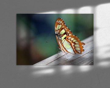 Vlinder op een stuk hout 3 von Klaase Fotografie