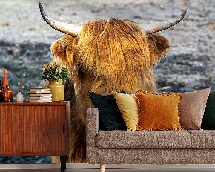 Beispiel fototapete: Highland-Cattle von Sven Frech