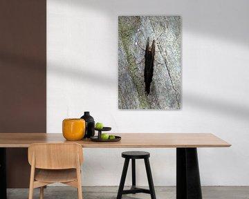 Vlinder van bovenaf von Klaase Fotografie