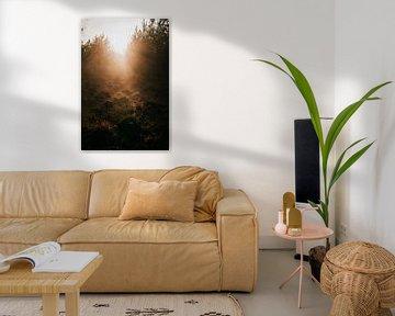 La lumière du soleil à travers les arbres | photographie de voyage ; photographie de nature ; impres sur Eva Krebbers | Tumbleweed & Fireflies Photography