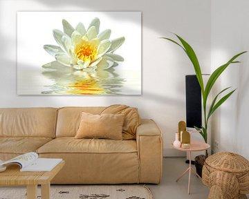 Weiße Lotosblume in Blüte von Nisangha Masselink