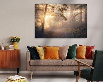 First Light van Erik de Jong