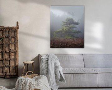 Subtle Light van Erik de Jong