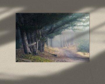 into the mist van Erik de Jong