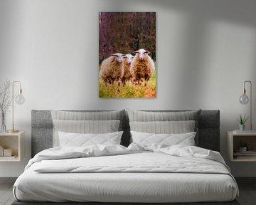 Hoog Buurlo und die Schafe.