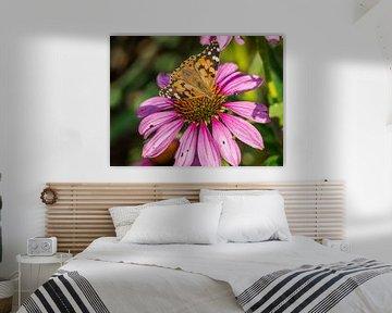 Distelfalter auf einem Sonnenhut von Animaflora PicsStock
